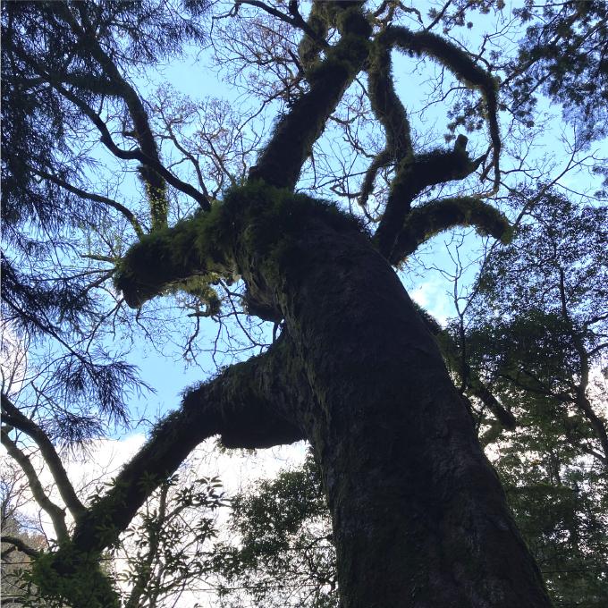 トチの原生林